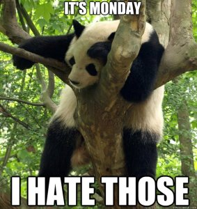 Panda in tree saying he hates mondays