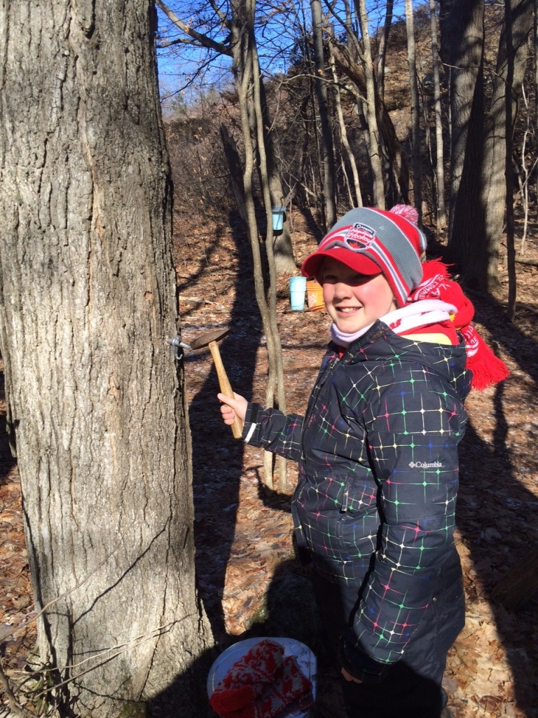 Clare tapping a maple tree