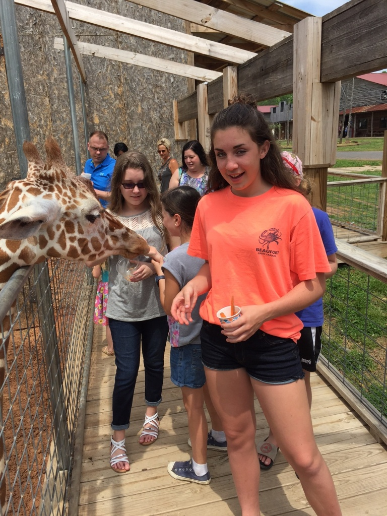 Girl feeding giraffe