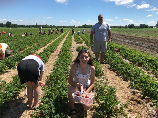 family in strawberry field