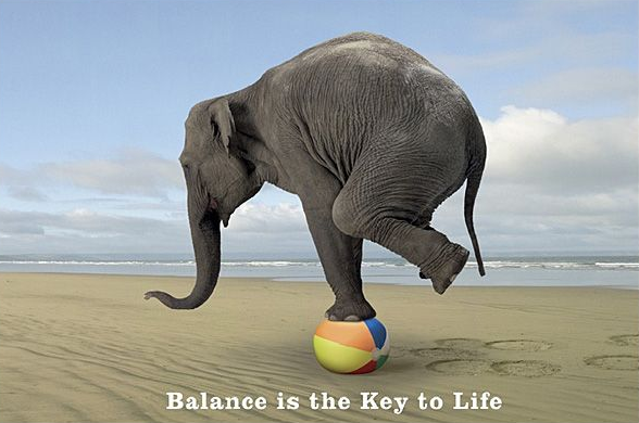 elephant balancing on a ball
