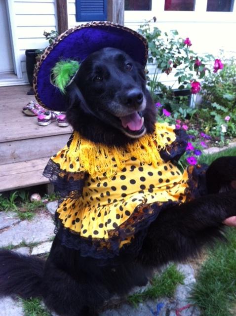 Dog in flamenco costume