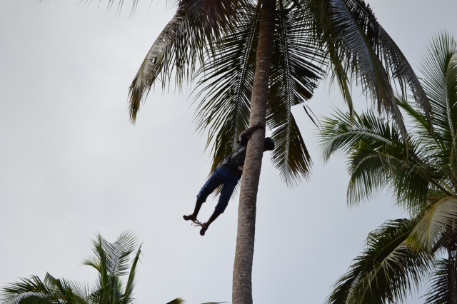 man in coconut tree