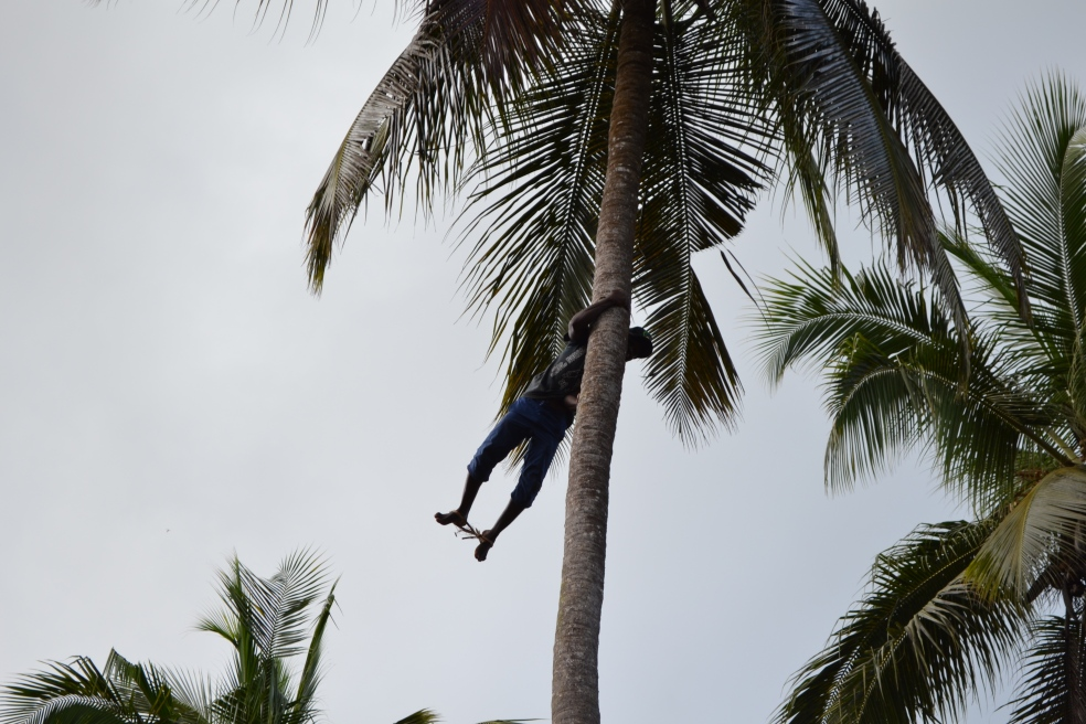 man in coconut tree