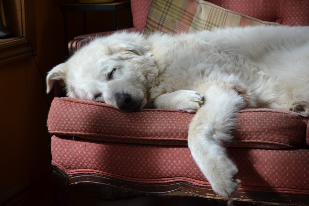 Photo of dog on couch