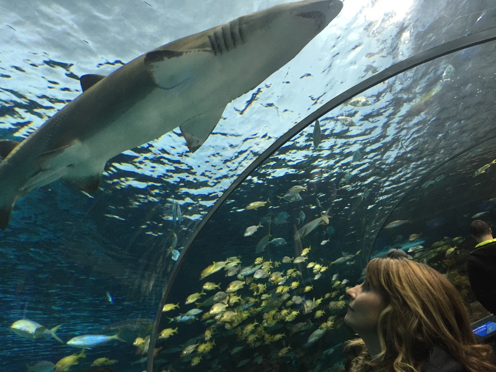 My friend looking at a shark