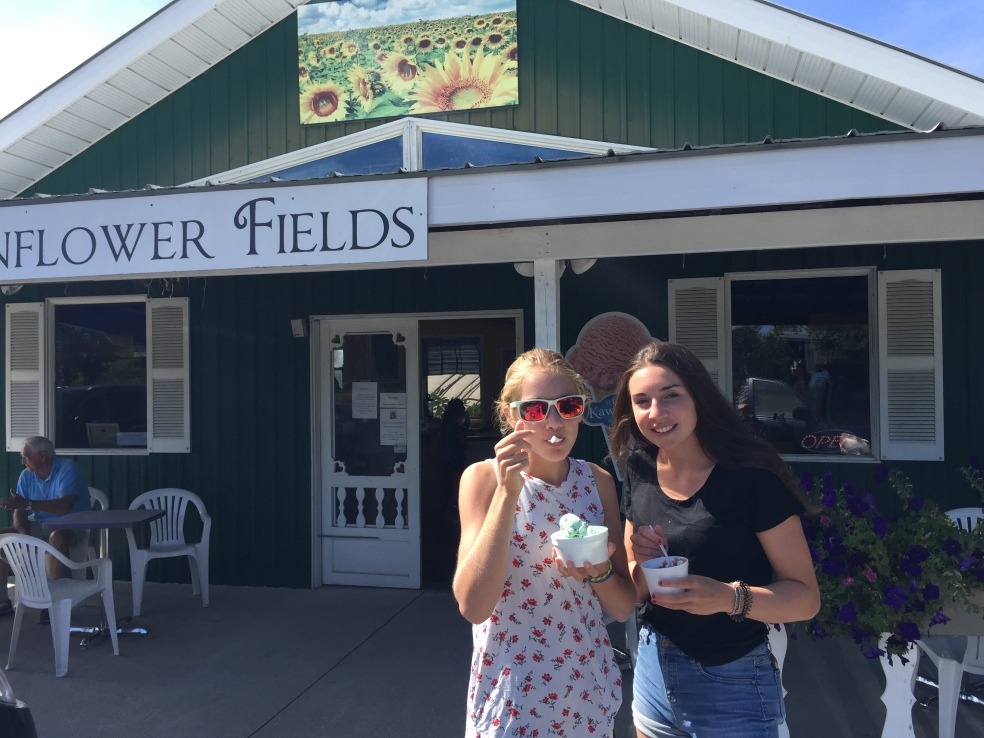 Sunflower fields ice cream shop