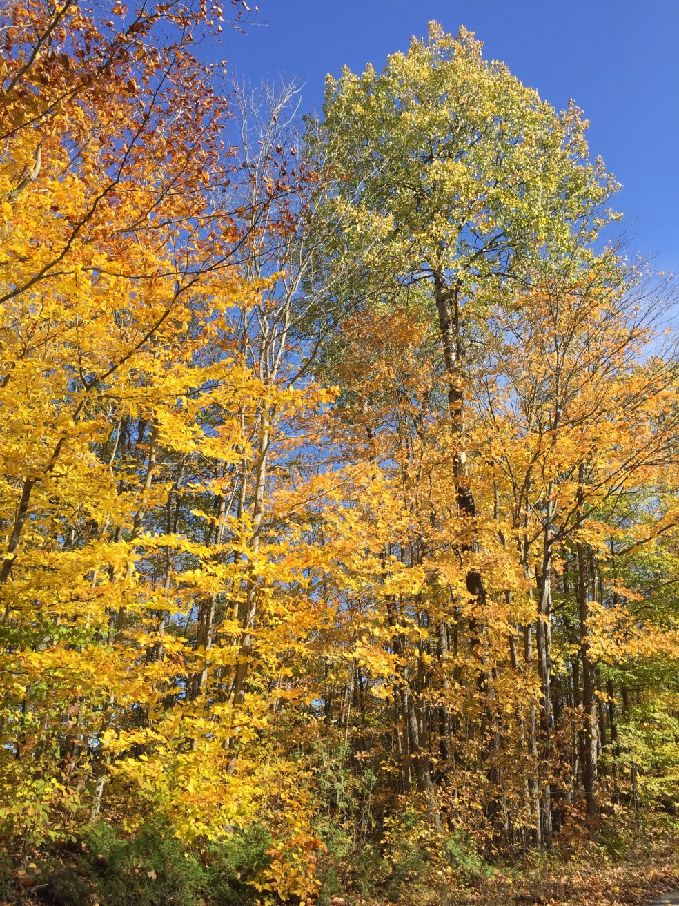yellow and red trees