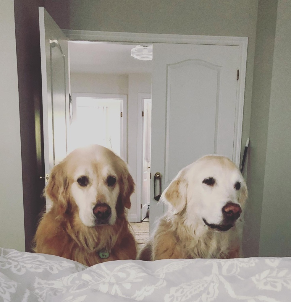 Two dogs looking at a bed