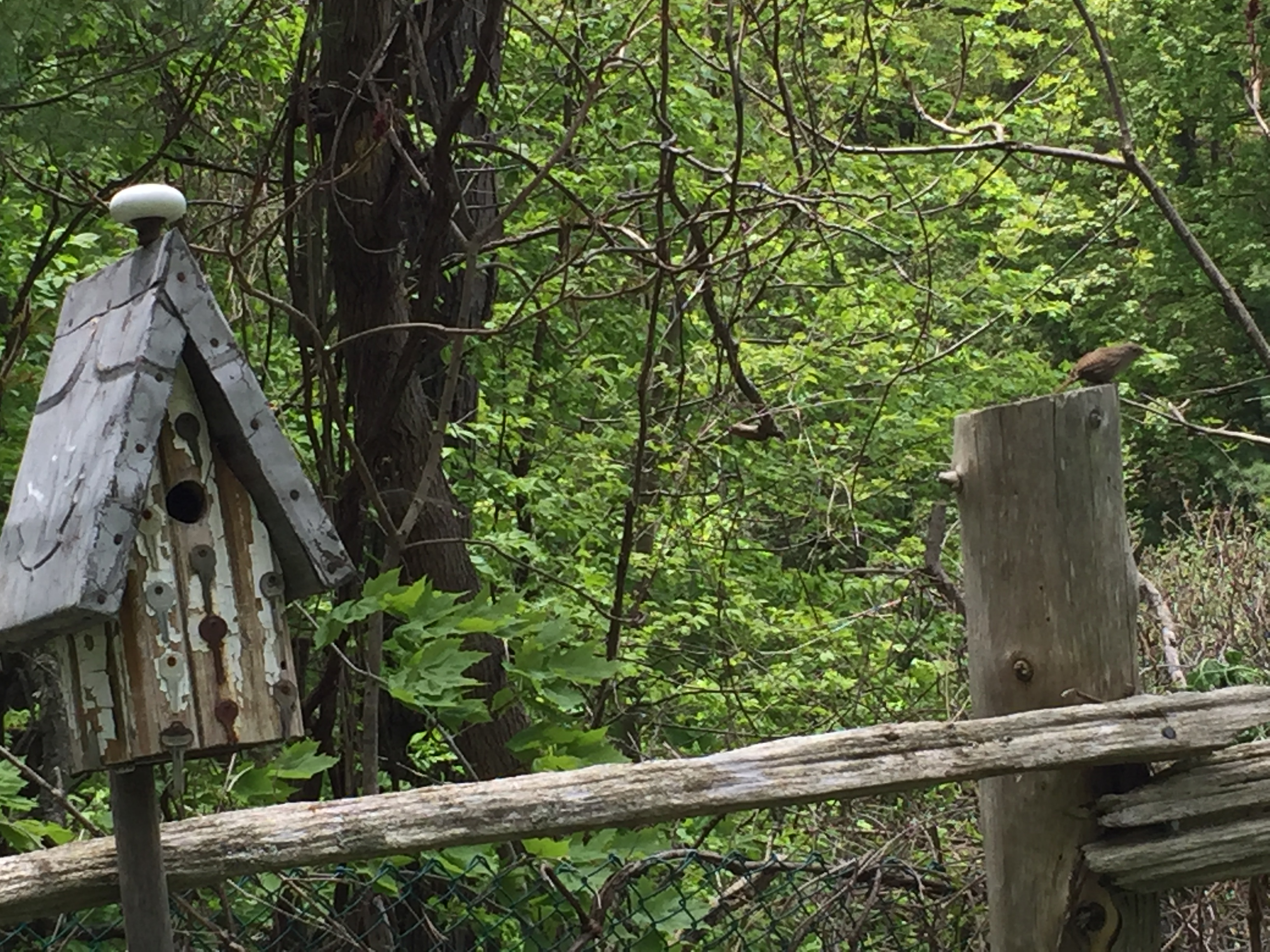 Birdhouse and wren