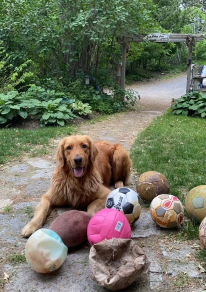 Dog with eight soccer balls